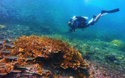 Filipinas se posiciona como destino líder en materia de buceo